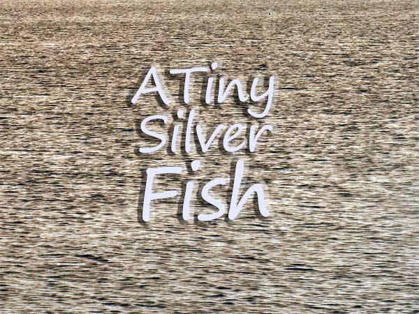A Tiny Silver Fish